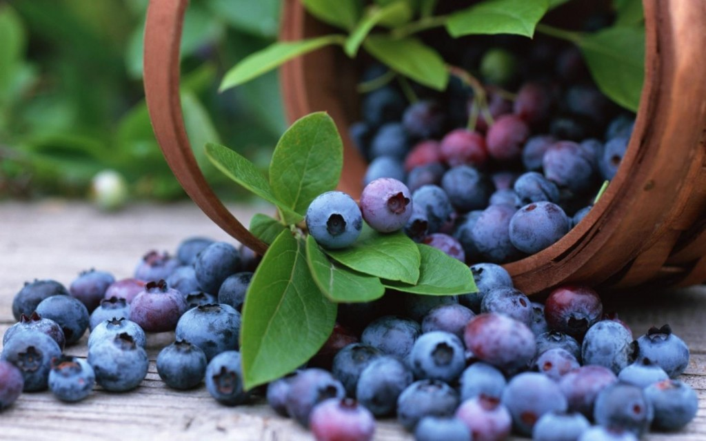 NguyenBinhVTV-150415030407-blueberries