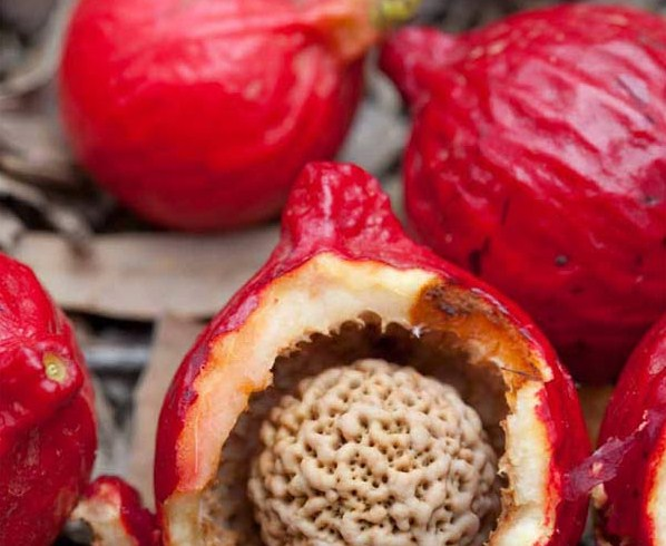 Quandong-fruit-2