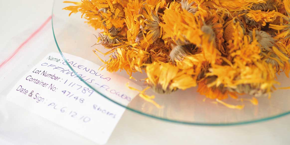 all_about_calendula_natural_expertise_0016
