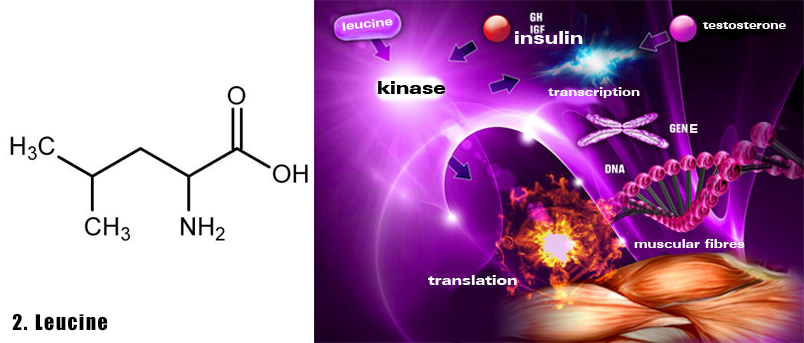 axit-amin-2