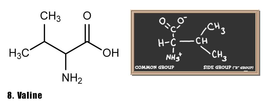 axit-amin-7