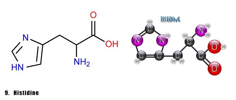axit-amin-8