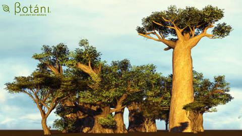 cây baobab