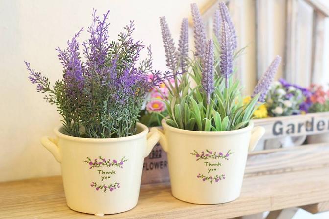 hoa lavender 2
