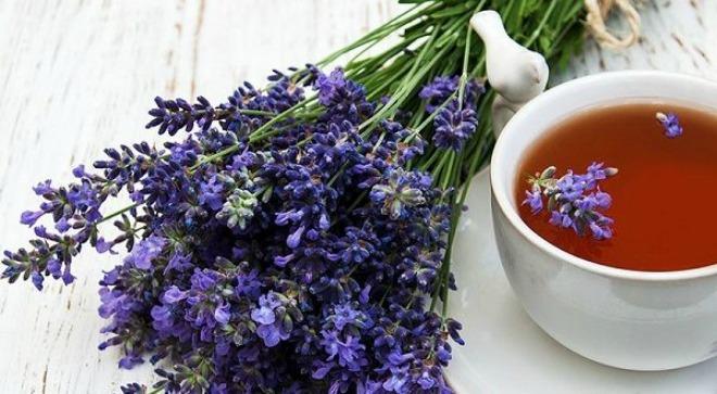 hoa lavender 3